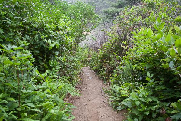 coastal forest trail