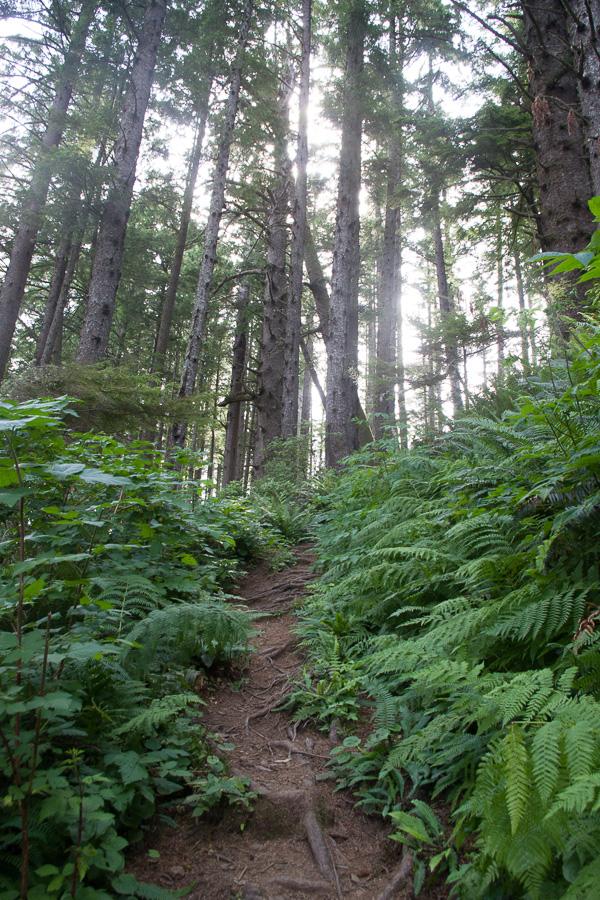 ferns climbing the hill