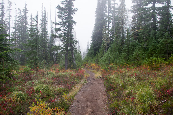 Indian Heaven Wilderness backpacking