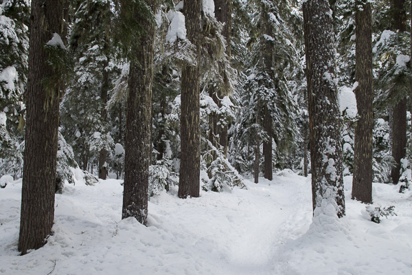 Mount Hood: Twin Lakes snowshoe