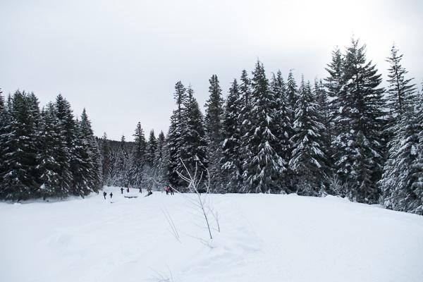 Mount Hood: Trillium Lake snowshoe