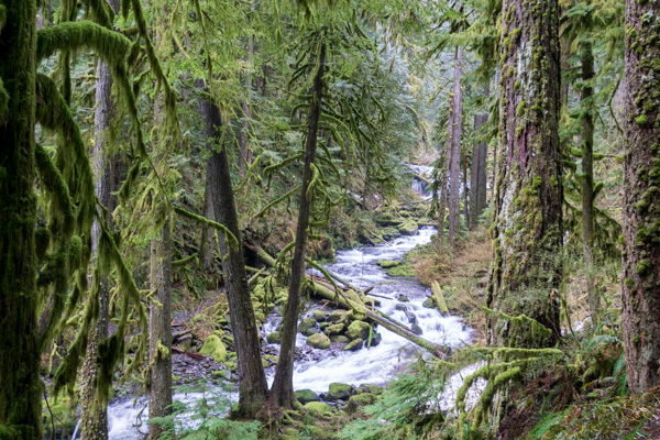 Spring is my favorite time of year to hike in the Columbia River Gorge. The waterfalls and streams are running full (especially with the amount of rain we've had this year!), and everything is super green.