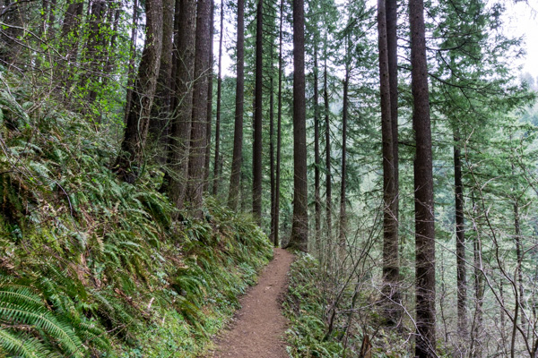 Wahkeena-Angels-Rest-Devils-Rest loop hike
